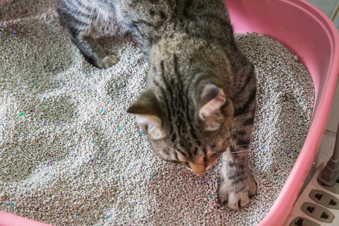 how to get cat poop and pee smell out of carpet